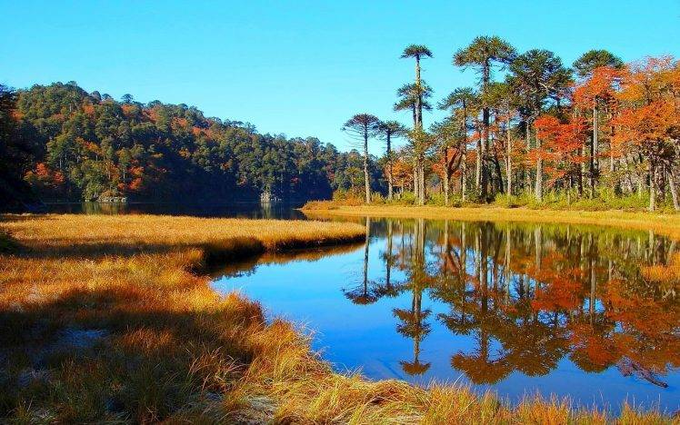 Fall Leaves Desktop Wallpaper Backgrouns Nature Landscape Lake Forest Dry Grass Hill Water