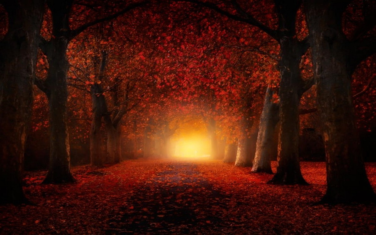 Fall Mist Wallpaper Nature Landscape Fall Atmosphere Leaves Path Trees