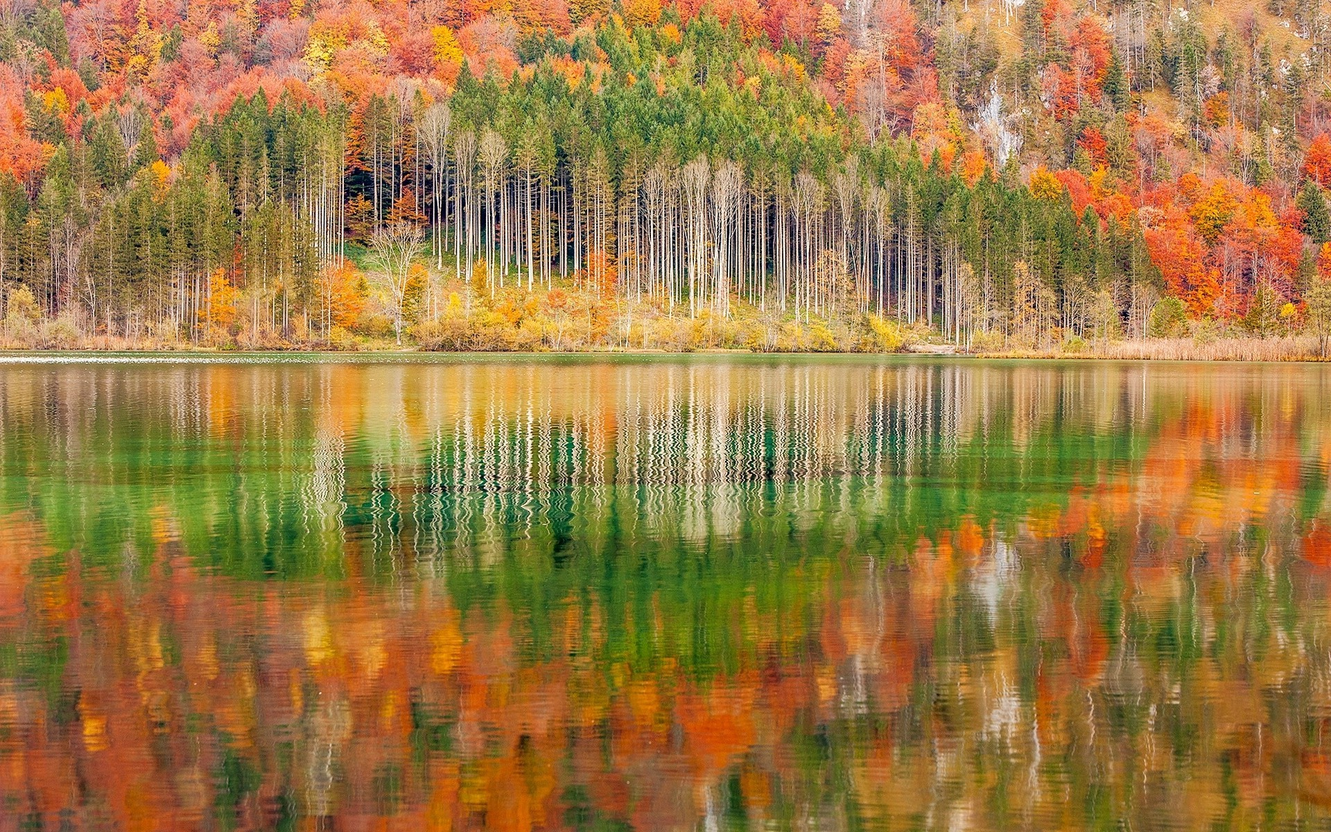 4k Fall Painting Wallpapers Nature Landscape Mountain Forest Lake Austria Trees