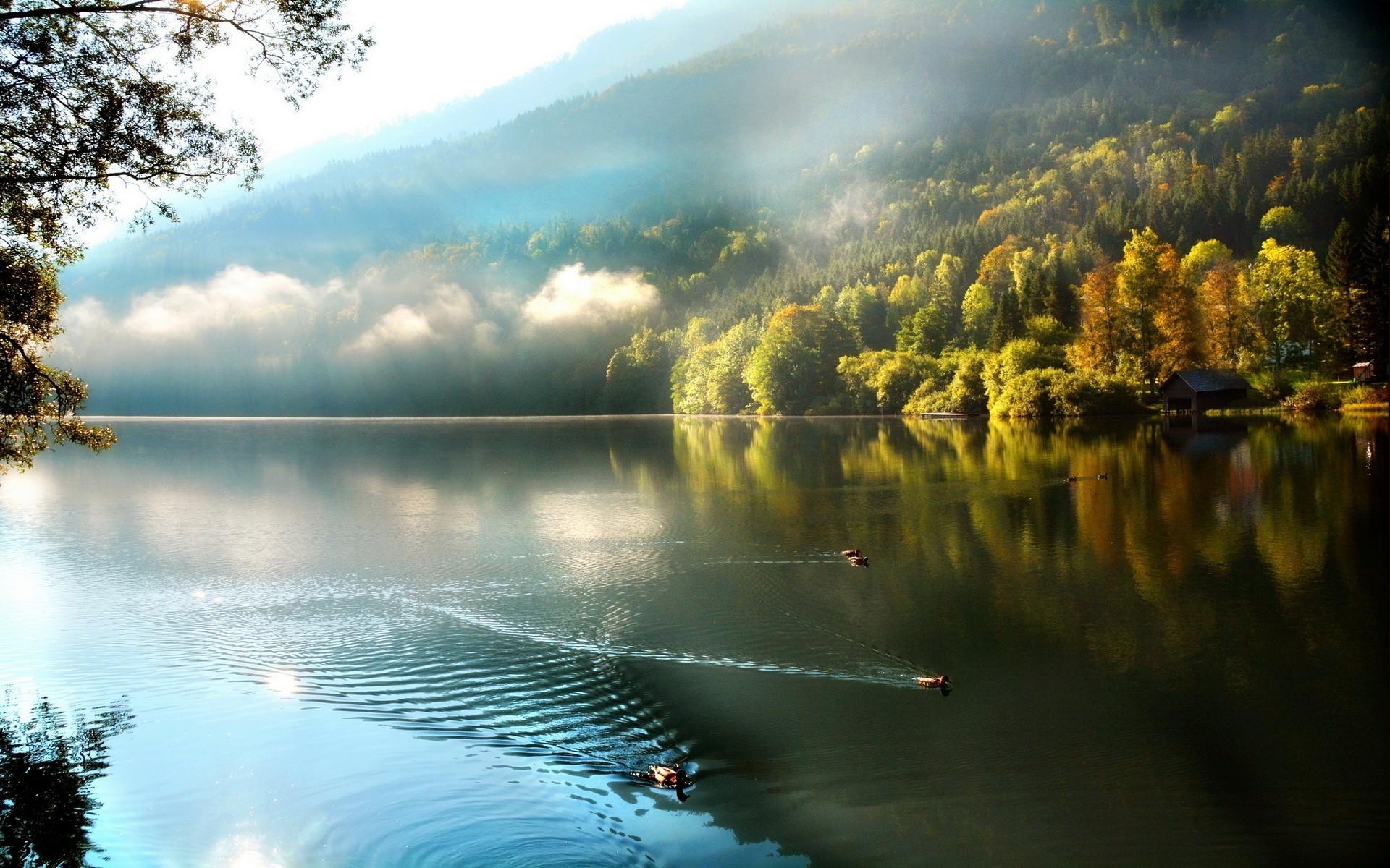 Full Screen Desktop Fall Wallpaper Fall Lake Nature Trees Mist Clouds Duck Water