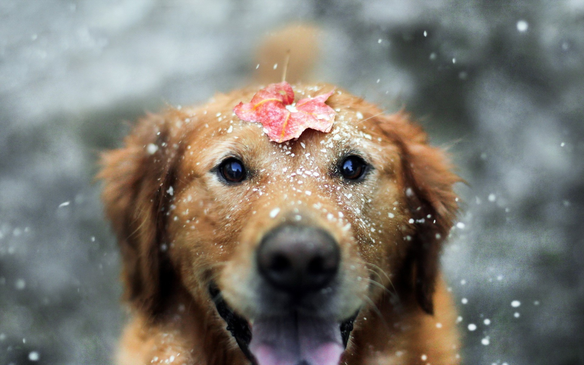 Sweet Cute Wallpapers For Laptop Dog Animals Snow Leaves Depth Of Field Wallpapers Hd