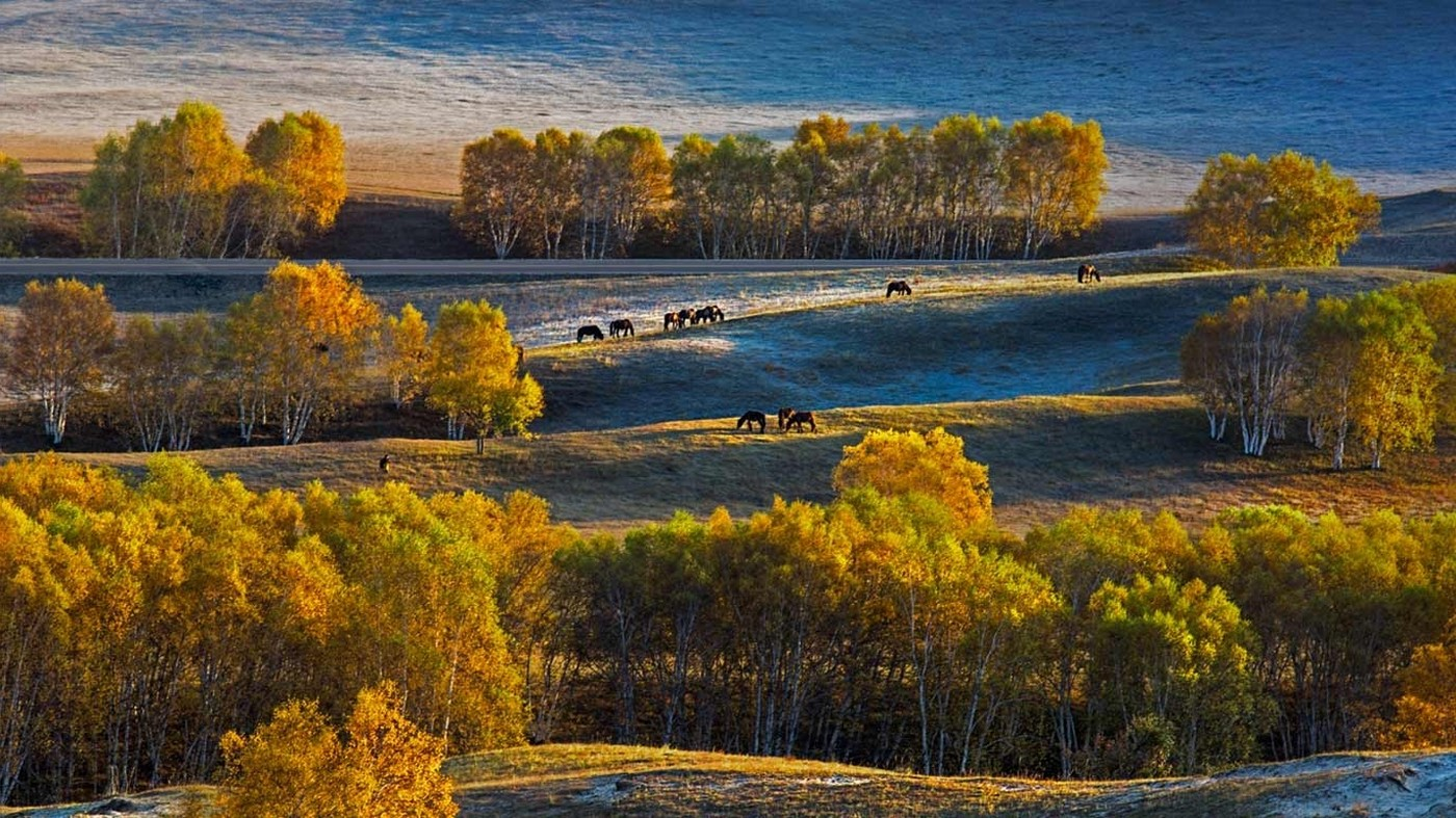 Birch Tree Fall Wallpaper Landscape Nature Birch Trees Fall Plateau Horse