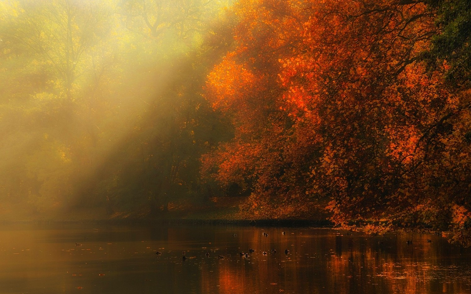 Fall Forest Wallpaper For Desktop Nature Landscape River Forest Fall Mist Sun Rays