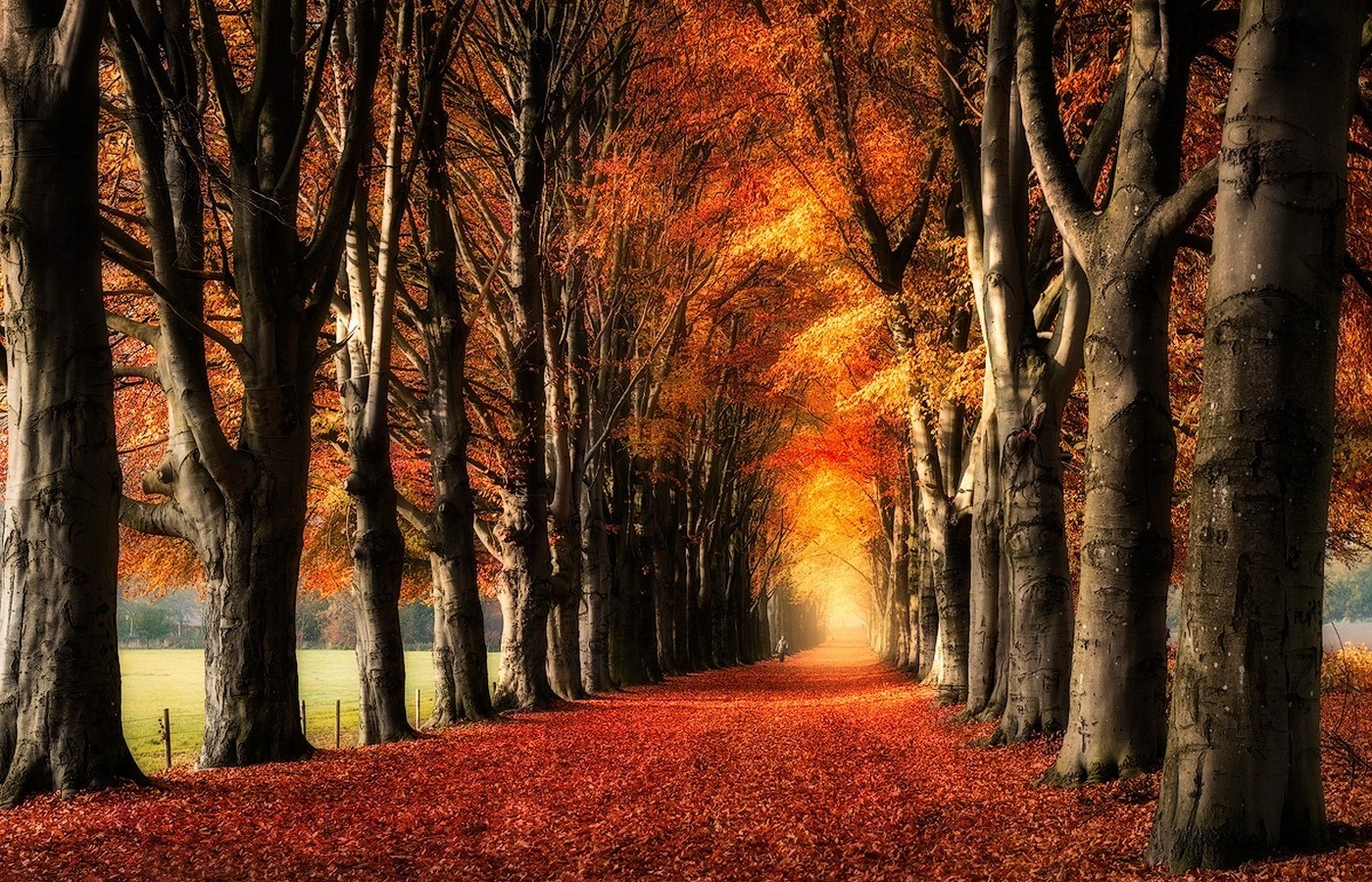 Fall Woodsy Pc Wallpaper Nature Landscape Trees Fall Yellow Red Leaves Path