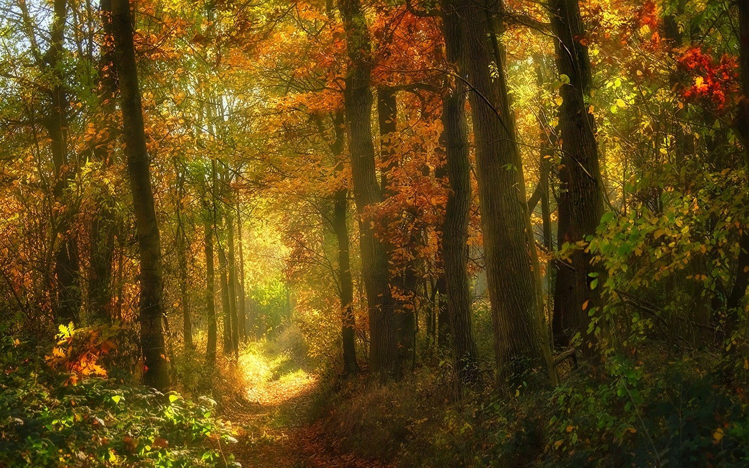 The Fall Movie Wallpaper Landscape Nature Fall Sunlight Forest Path Shrubs