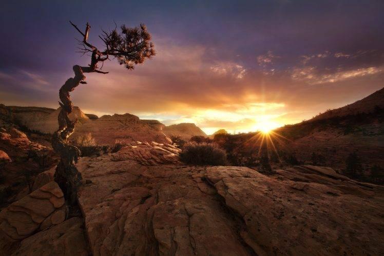 1920x800 Fall Wallpaper Nature Landscape Fall Sunset Desert Trees Zion