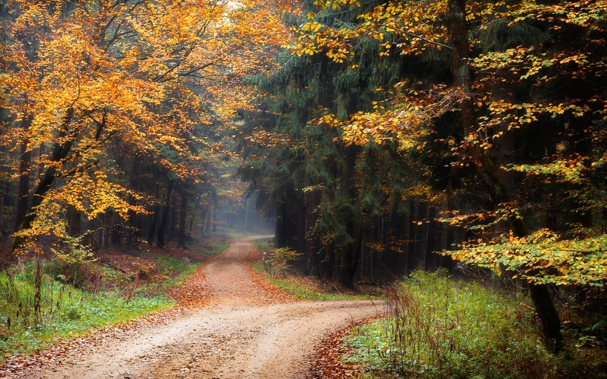 Fall Wallpaper 1600x900 Landscape Nature Dirt Road Forest Fall Leaves Trees