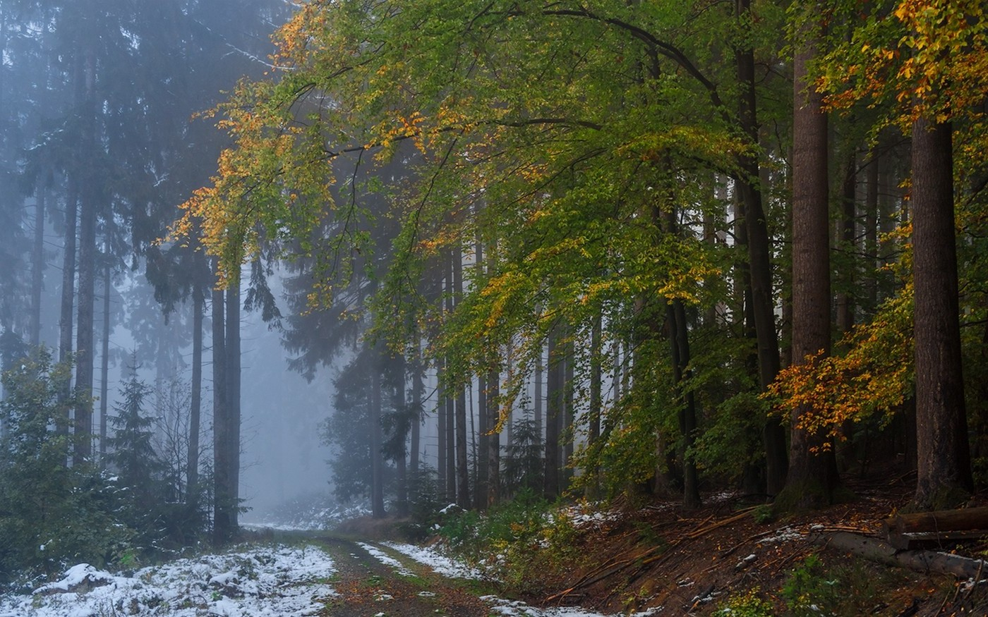 Fall Wallpaper Backgrounds Desktop Nature Landscape Forest Fall Mist Snow Path Dirt