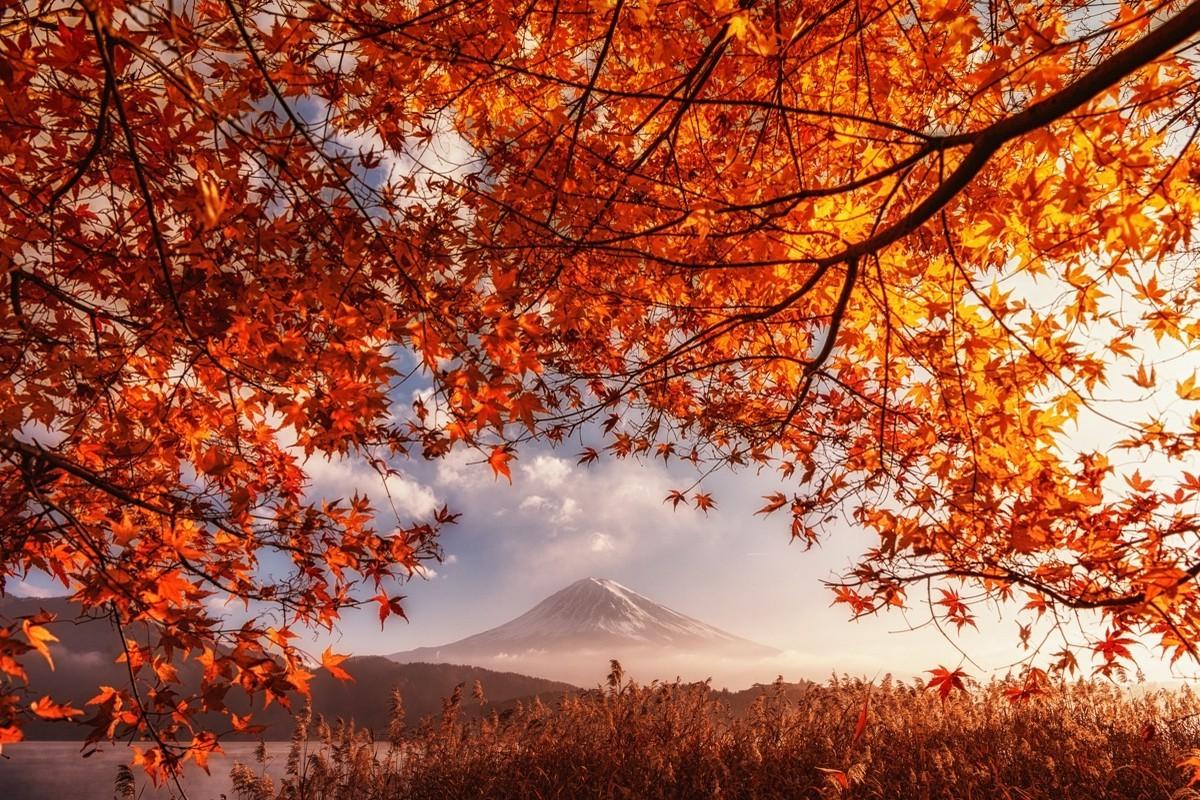 Fall Leaf Wallpaper For Mobile Fall Volcano Mount Fuji Japan Orange Leaves Mountain