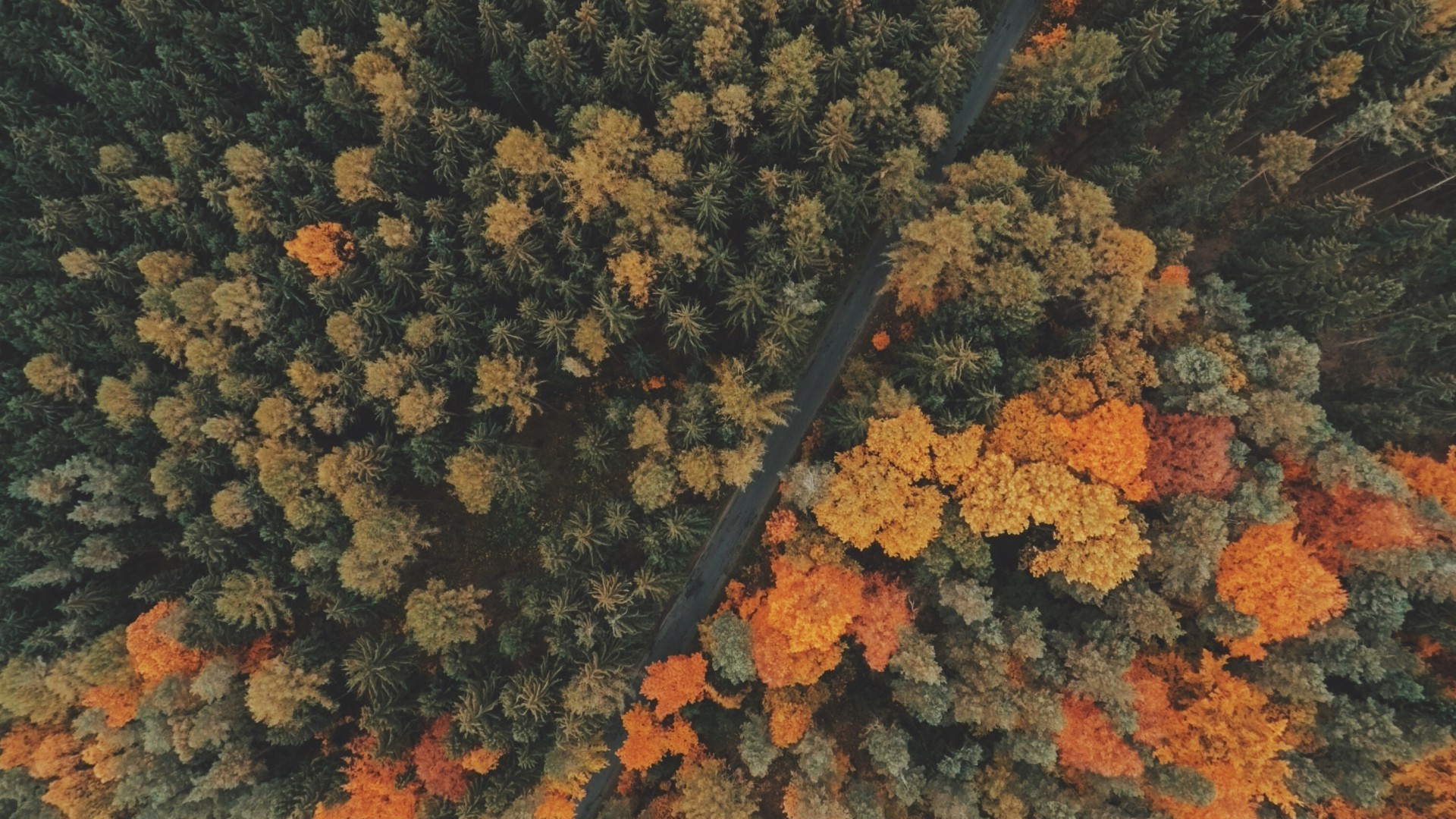 Fall Border Wallpaper For Desktop Nature Trees Forest Road Fall Landscape Aerial View