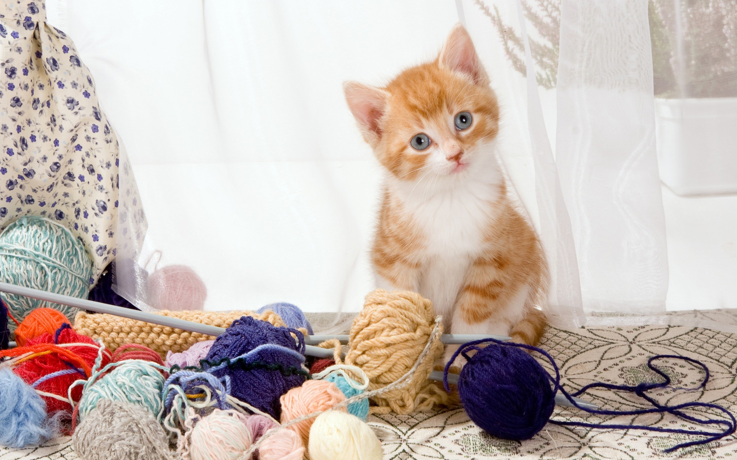 kittens, Cat, Yarn, Animals Wallpapers HD / Desktop and Mobile Backgrounds