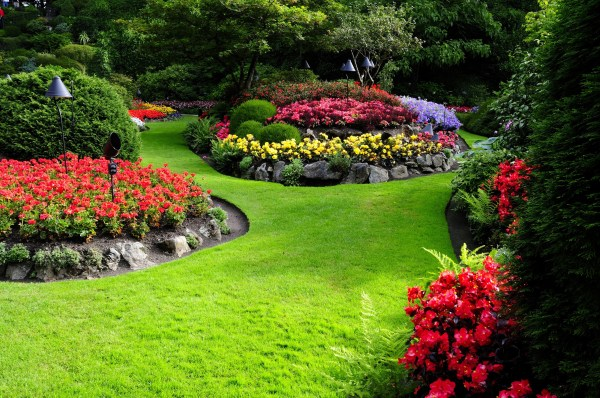 nature flowers garden landscape
