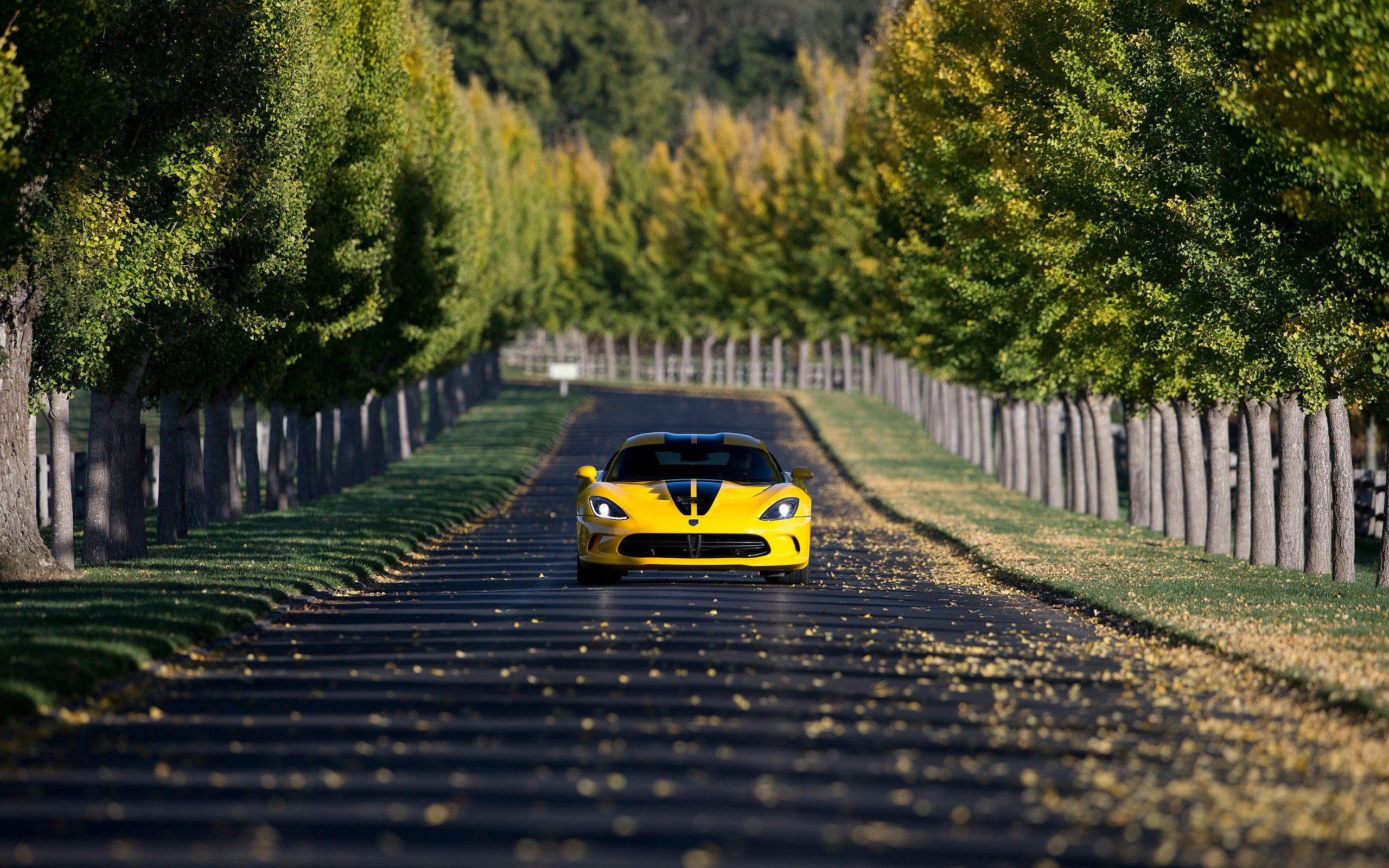 Vintage Car Hd Wallpapers For Pc Dodge Viper Car Yellow Cars Road Trees Depth Of Field