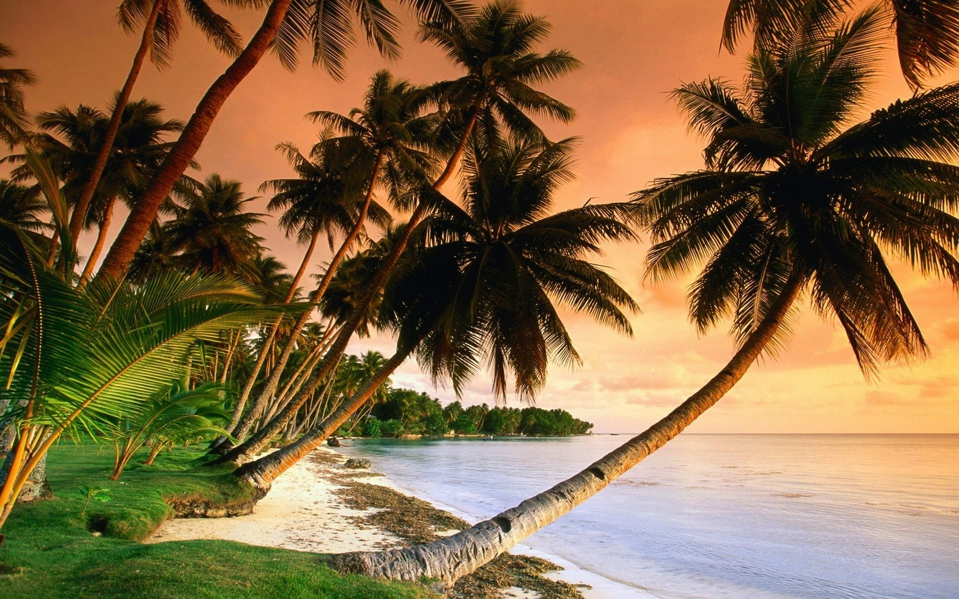 Exotic Animal Wallpaper Nature Sunset Tropical Wallpapers Hd Desktop And