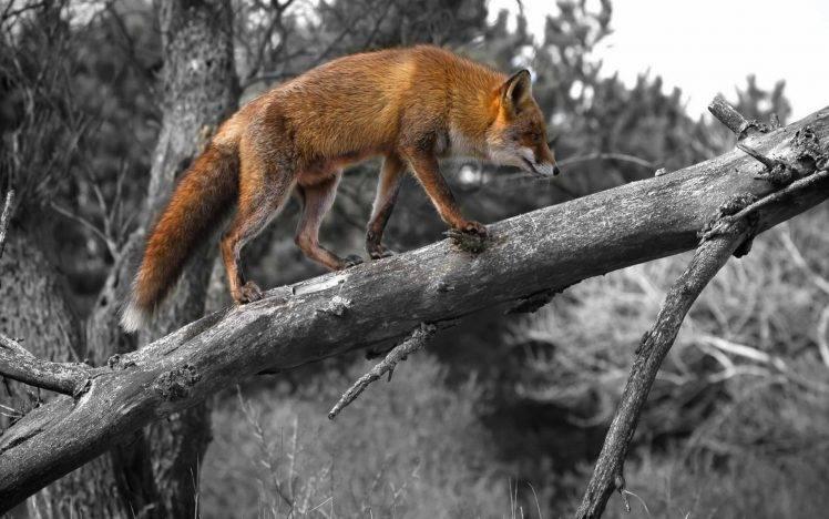 Winter Wildlife Wallpaper Desktop