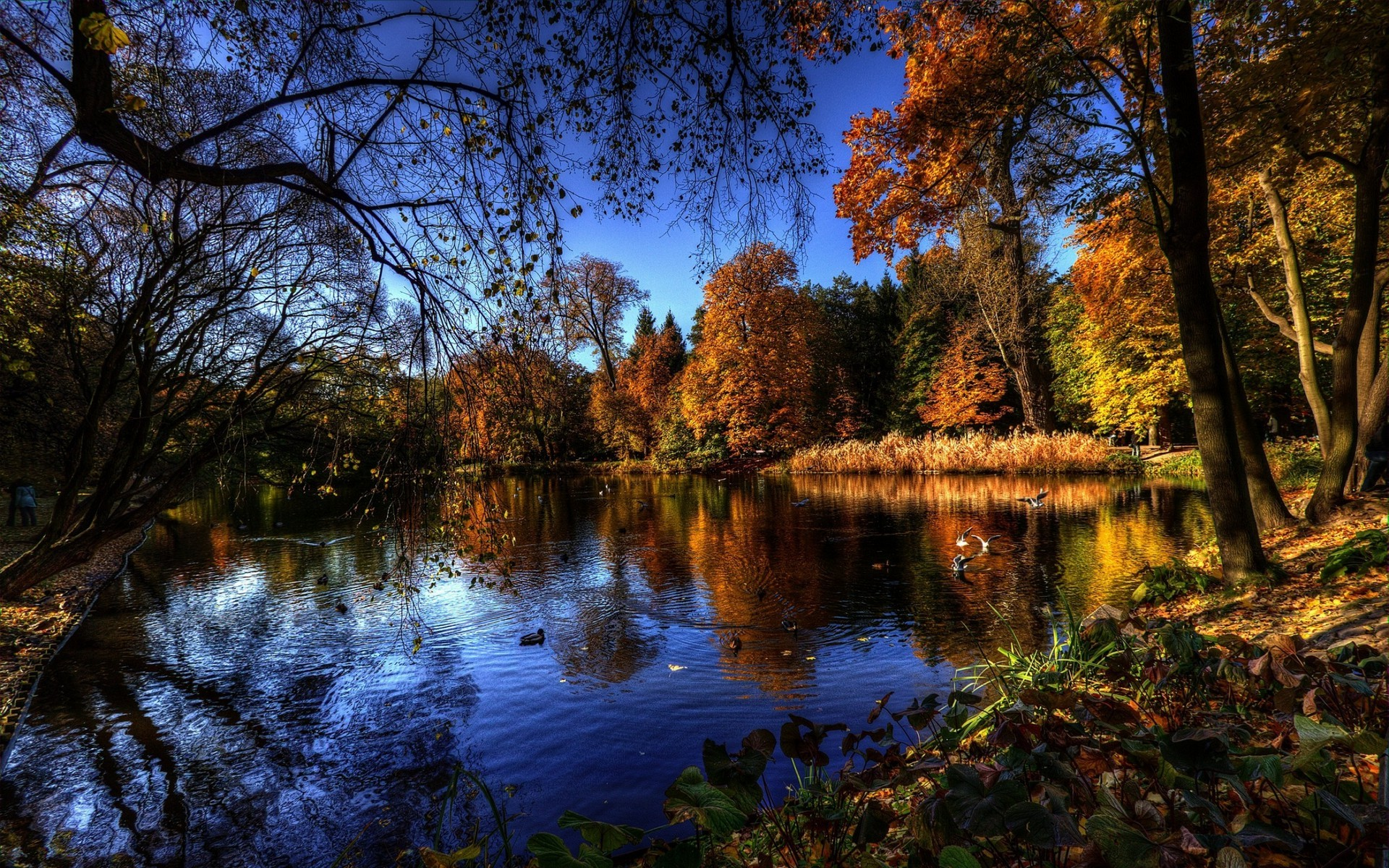 Bing Wallpaper Fall Lake Forest Nature Wallpapers Hd Desktop And Mobile