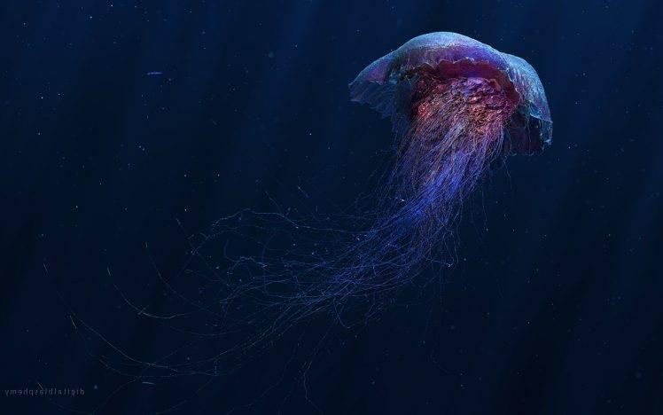 digital art jellyfish wallpapers