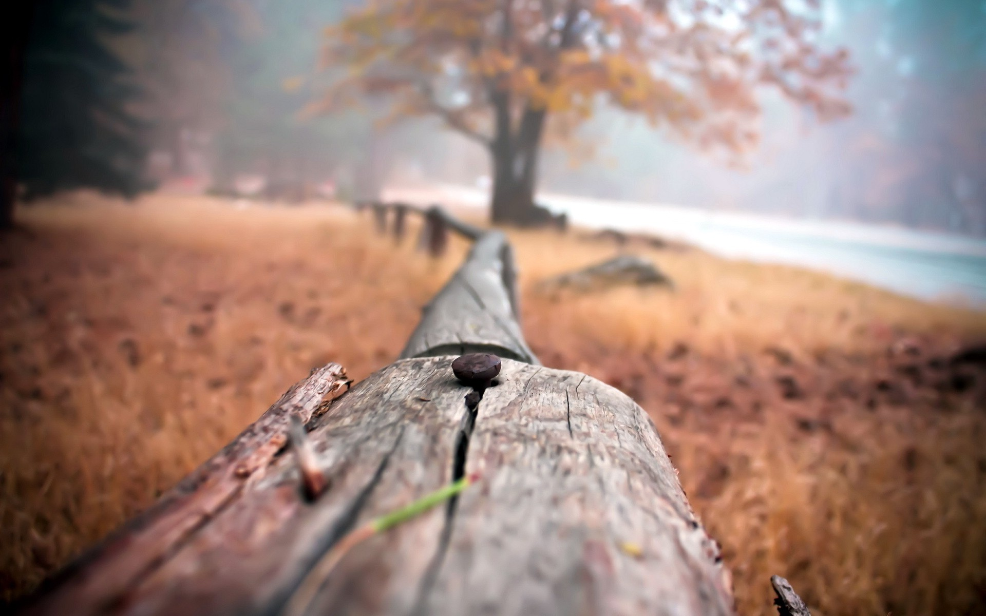 Fall Mobile Wallpapers Fence Wood Depth Of Field Nature Nails Wallpapers Hd