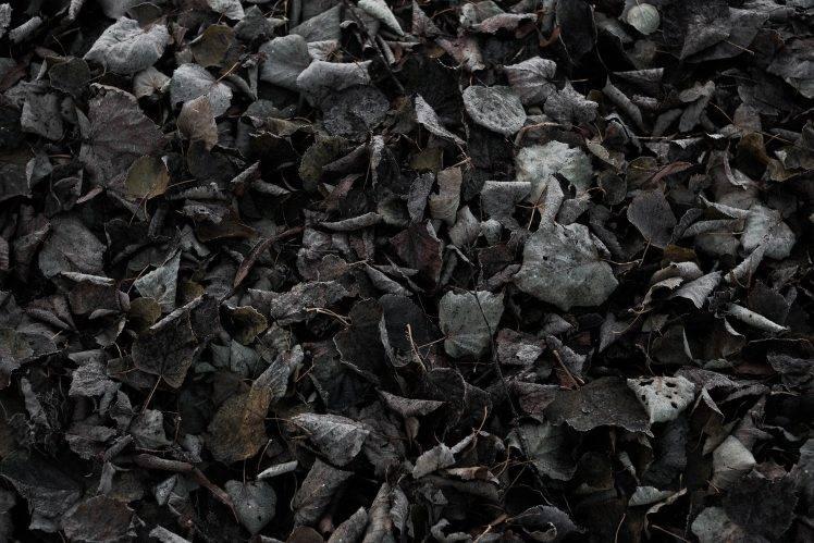 Full Screen Desktop Fall Leaves Wallpaper Nature Fall Cold Ground Texture Dark Leaves