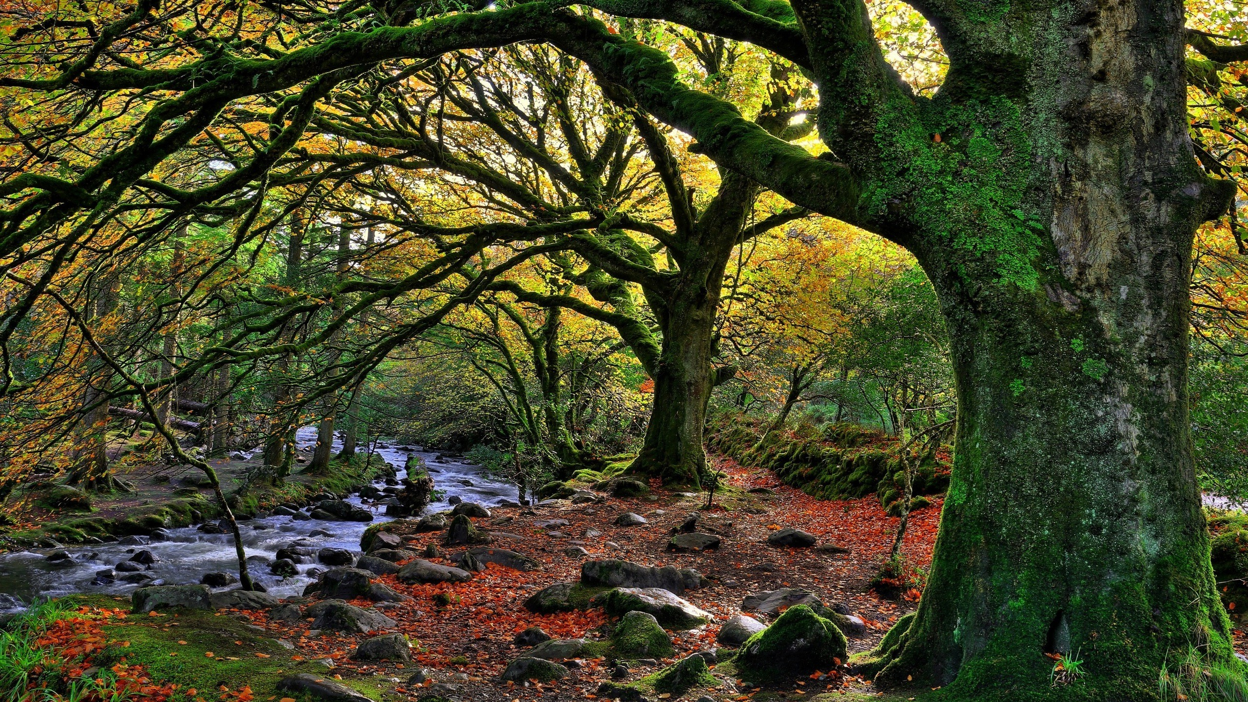 Ireland Fall Wallpaper Nature Trees Forest Water Ireland National Park