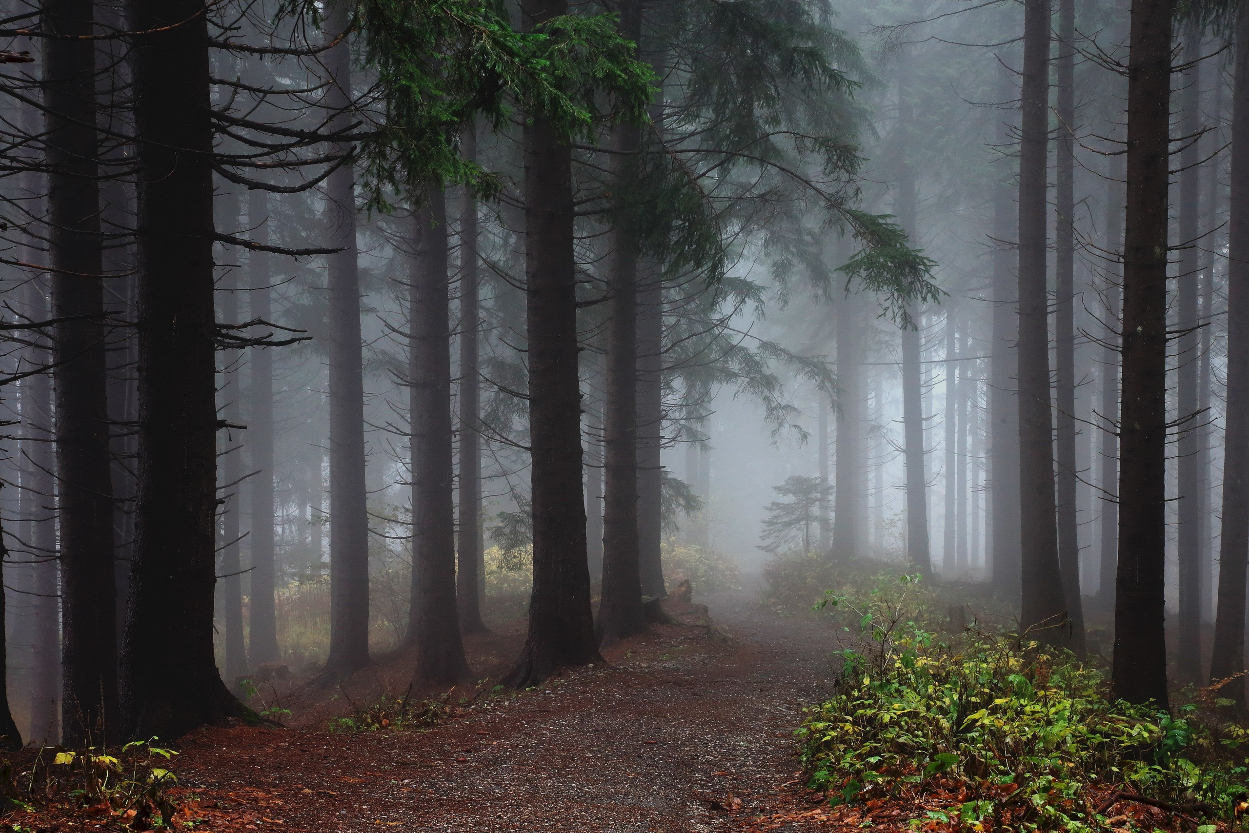1280x1024 Fall Wallpaper Nature Trees Forest Mist Wood Leaves Plants Path
