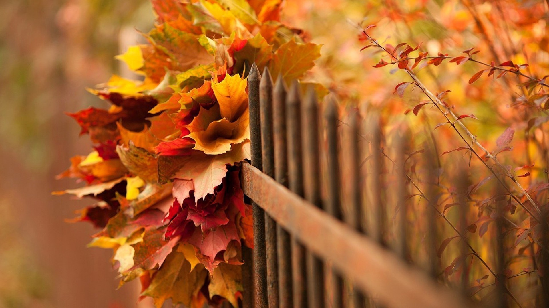 Fall Leaves Desktop Wallpaper Backgrounds Nature Trees Leaves Fall Branch Wood Fence Depth Of