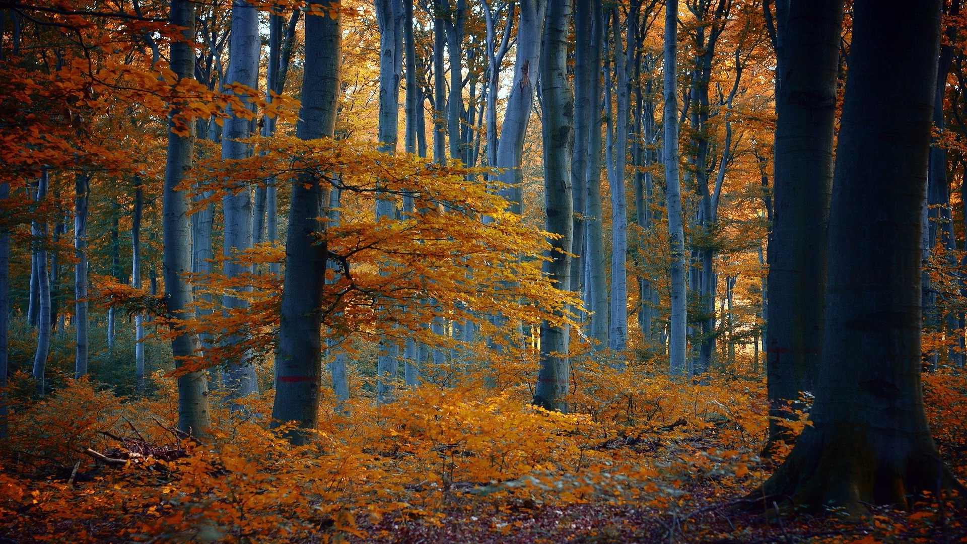 Funny Fall Wallpaper Nature Trees Forest Fall Branch Leaves Yellow Wood
