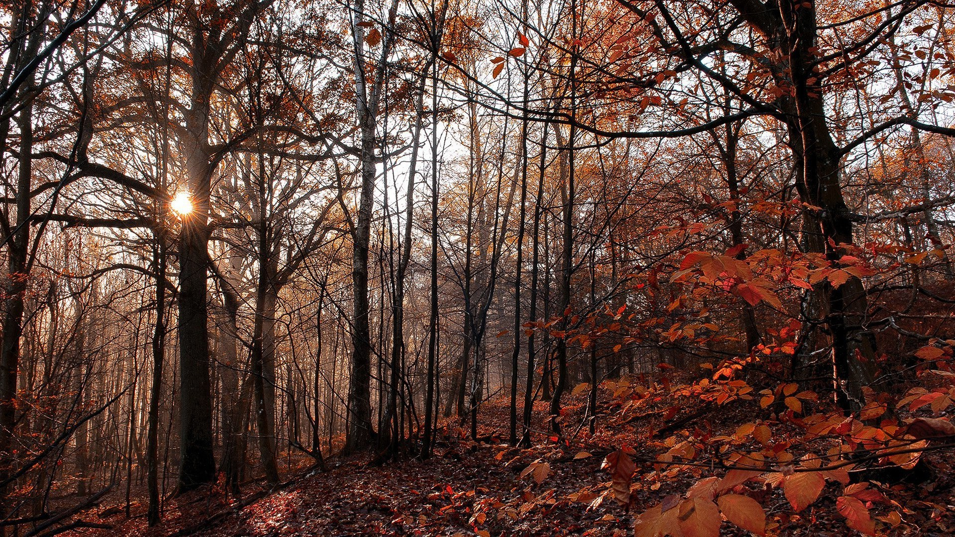 Fall Leaves Hd Desktop Wallpaper Nature Trees Forest Fall Branch Leaves Yellow Wood