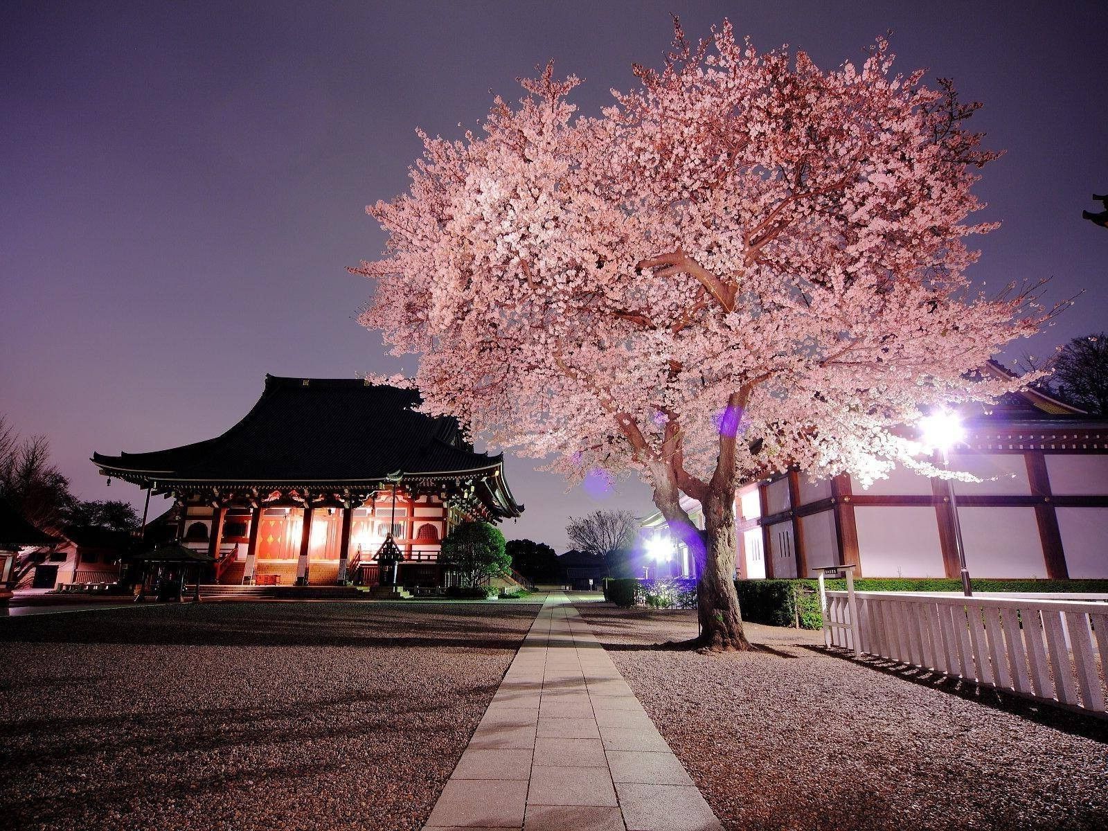 nature. Japan. Cherry Blossom Wallpapers HD / Desktop and Mobile Backgrounds