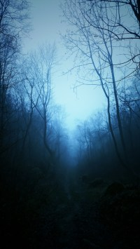 mist, Nature, Dark, Blue, Trees, Tropical Forest, Forest