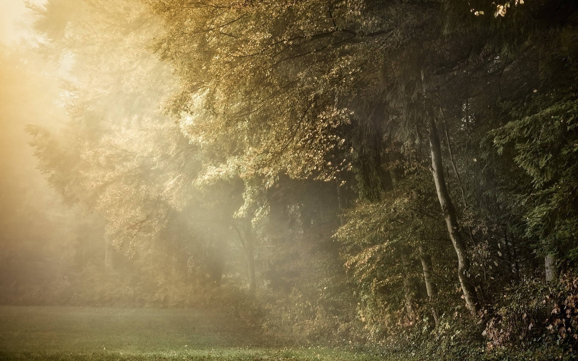 photography Nature Trees Plants Sun Rays Forest