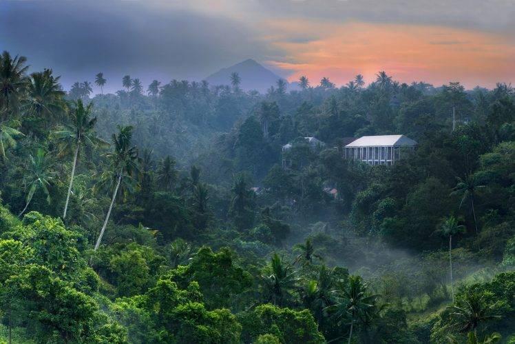 Rain Fall Hd Wallpaper Download Nature Landscape Tropical Forest Sunrise Jungles
