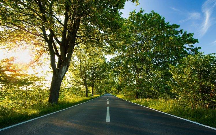 Interfacelift Fall Wallpaper Photography Nature Plants Trees Landscape Road Sun