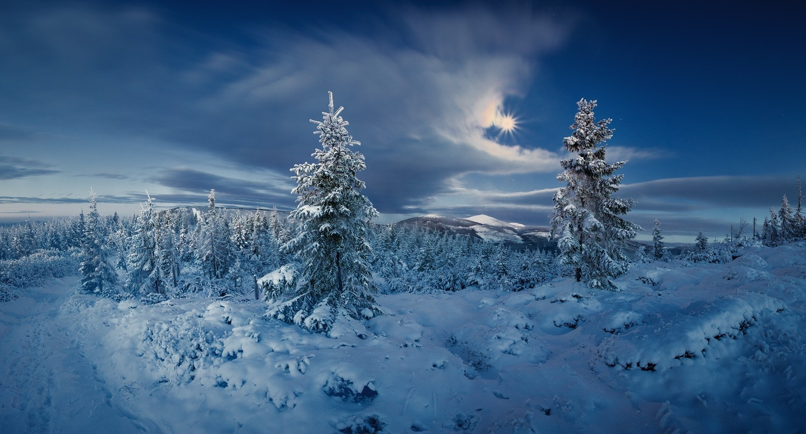 Animal Wallpaper Full Hd Landscape Nature Forest Winter Snow Cold Sun Clouds