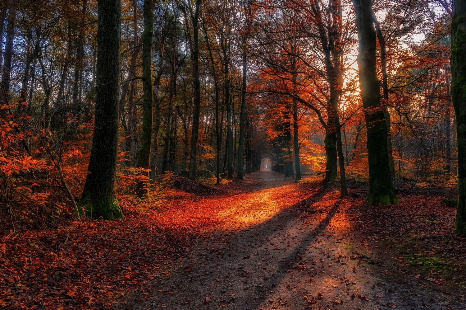 Full Screen Desktop Fall Leaves Wallpaper Landscape Nature Path Fall Forest Red Leaves