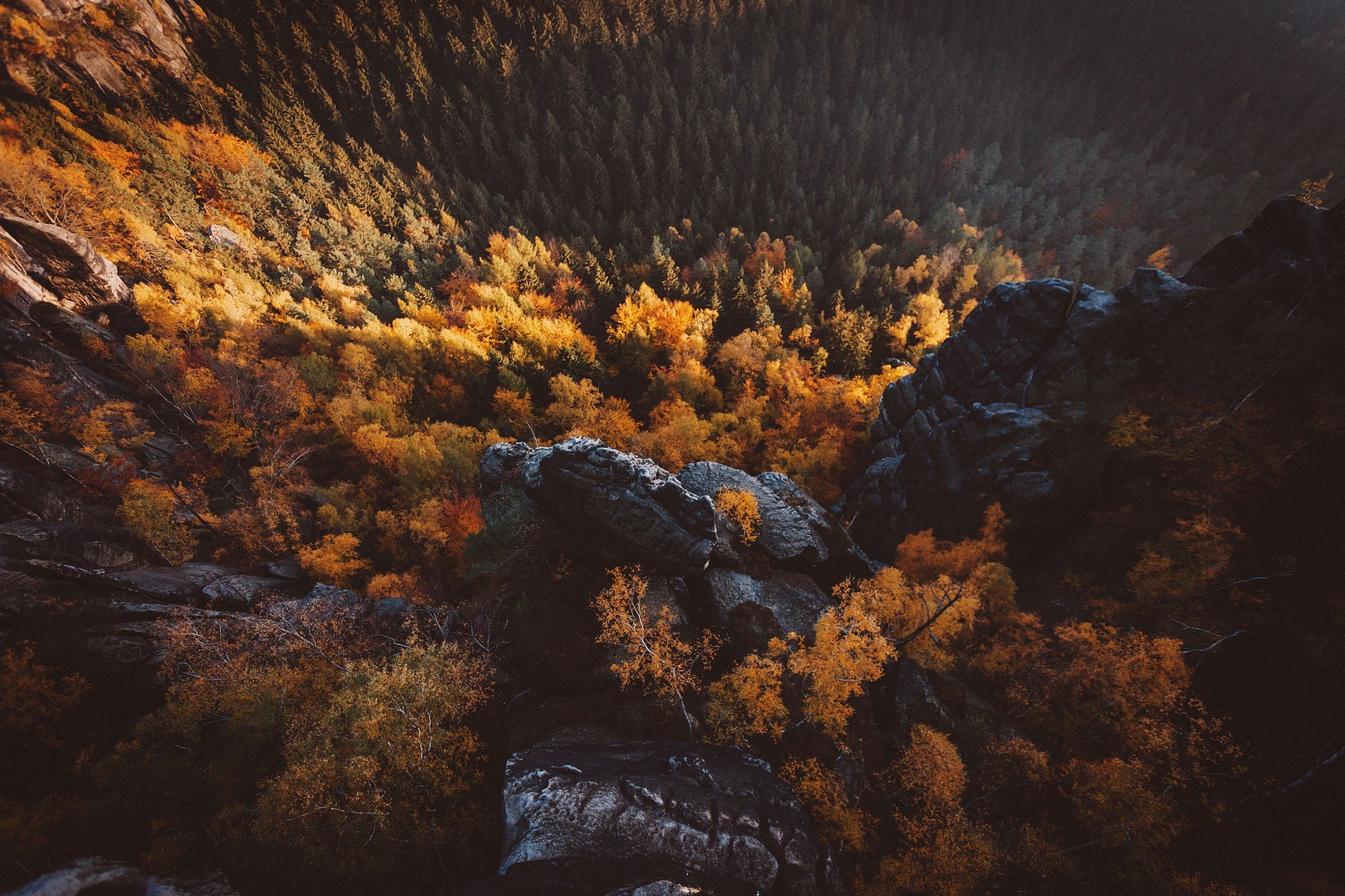 1920x1200 Fall Wallpaper Landscape Nature Trees Aerial View Forest Fall