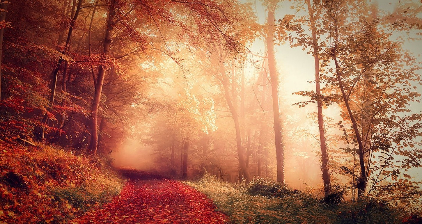 Hd Wallpaper Fall Leaves Nature Landscape Fall Forest Mist Path Dirt Road