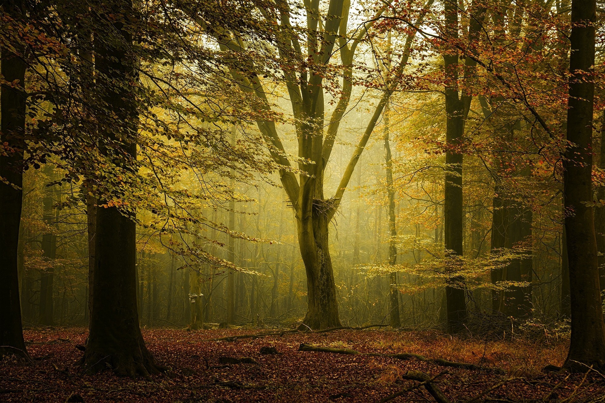 Netherlands Fall Wallpaper Landscape Nature Fall Forest Sunlight Mist Leaves