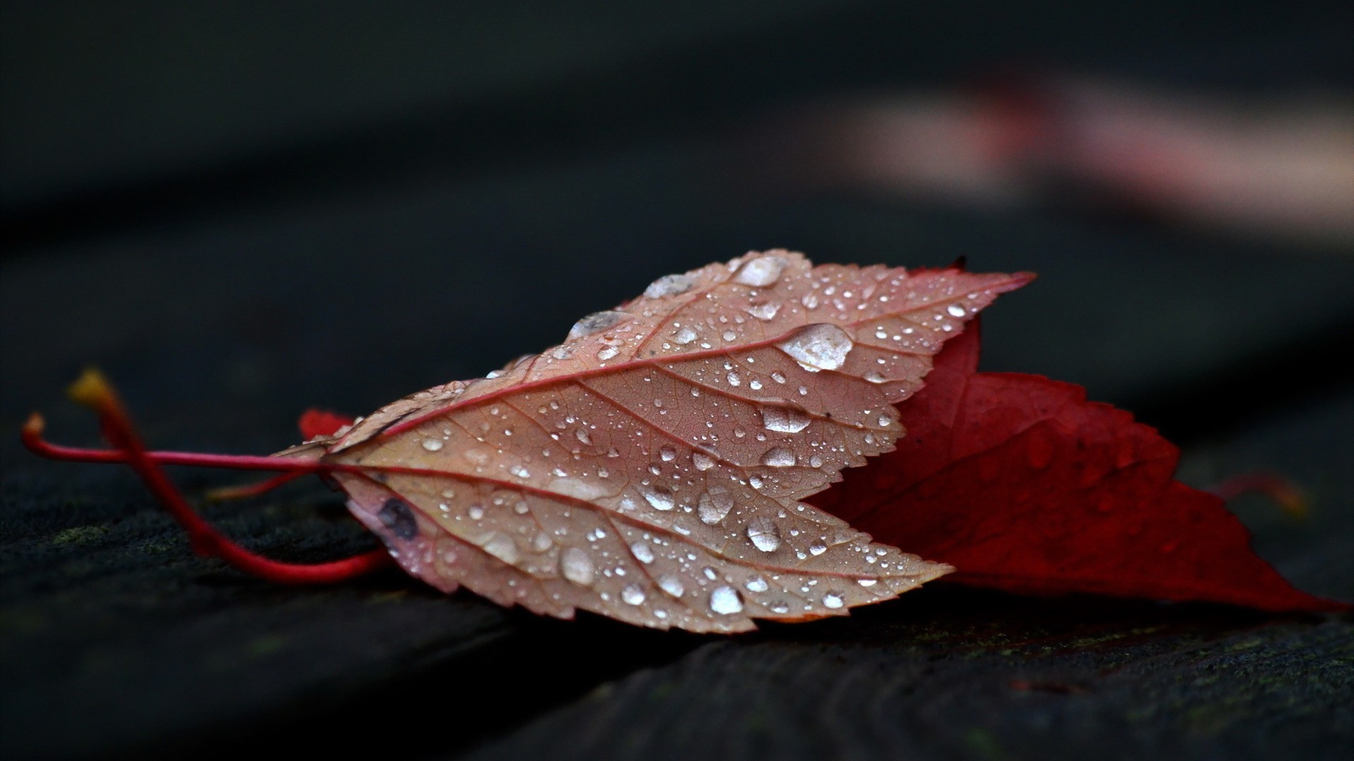 Live Wallpaper Fall Leaves Nature Leaves Fall Closeup Depth Of Field Wooden