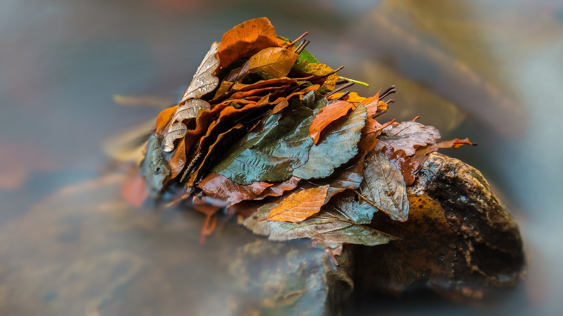 Full Screen Desktop Fall Leaves Wallpaper Nature Leaves Fall Closeup Depth Of Field Water Drops