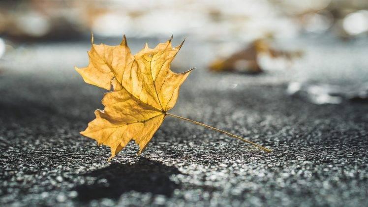 Fall Leaves Falling Wallpaper Nature Leaves Fall Closeup Depth Of Field Sunlight