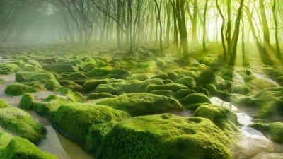 nature, Landscape, Water, Trees, Forest, Moss, Mist ...