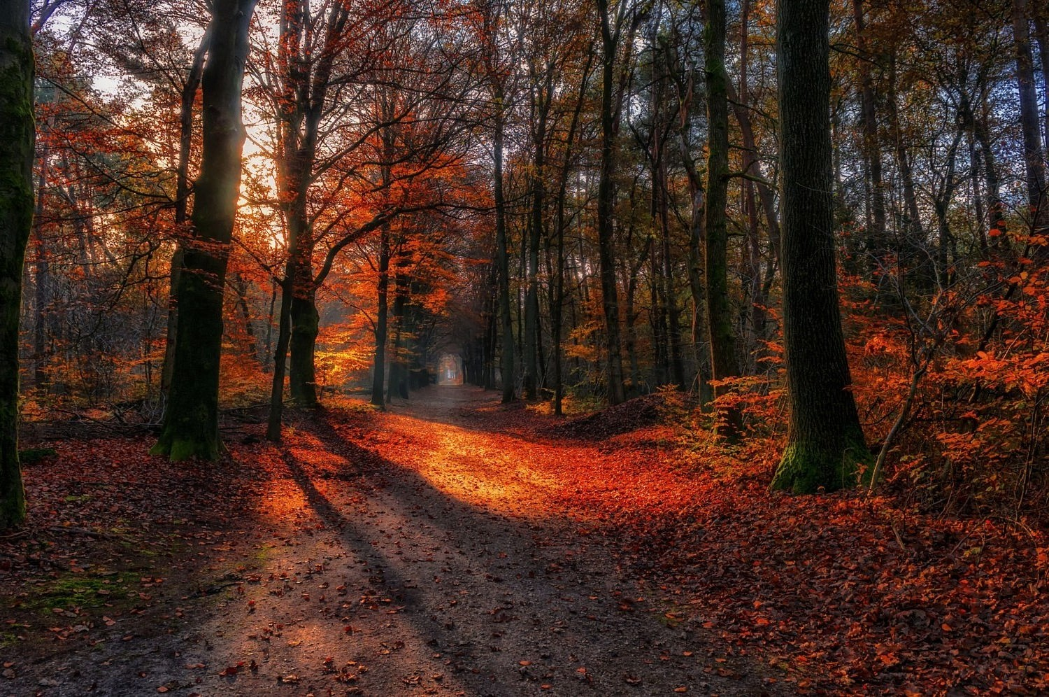 Desktop Wallpaper Fall Leaves Landscape Nature Path Fall Forest Red Leaves