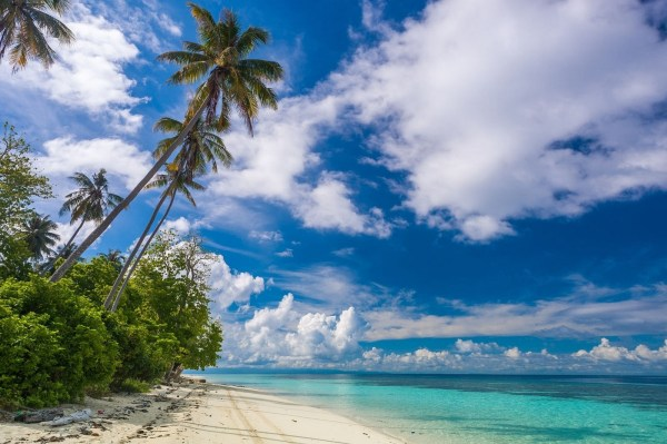 Tropical Beach Landscape Palm Trees