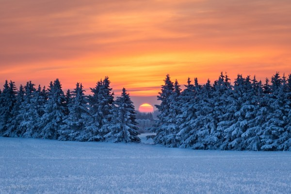 pine trees snow landscape wallpapers