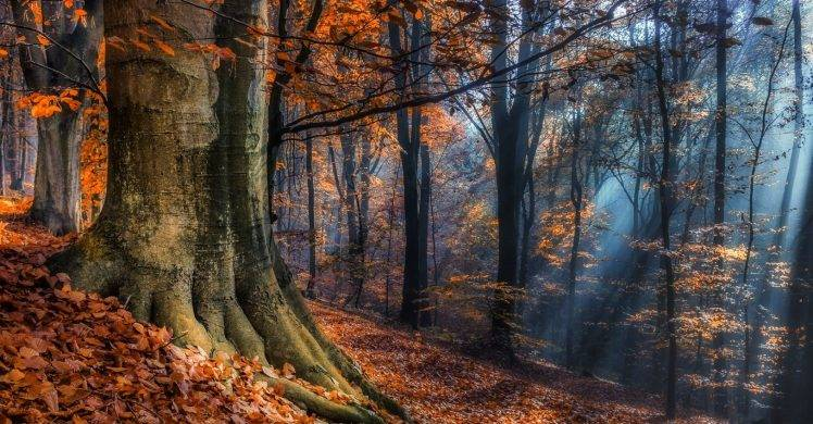 Full Screen Desktop Fall Leaves Wallpaper Landscape Nature Sun Rays Forest Fall Leaves