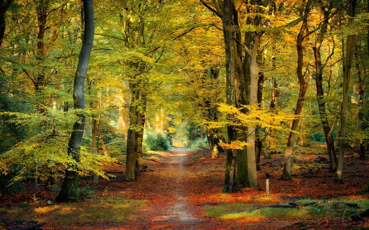 Fall Leaves Hd Mobile Wallpaper Nature Landscape Fall Forest Path Leaves Sunlight