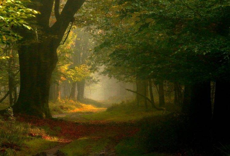 Whimsical Fall Desktop Wallpaper Photography Landscape Nature Fairy Tale Forest Mist