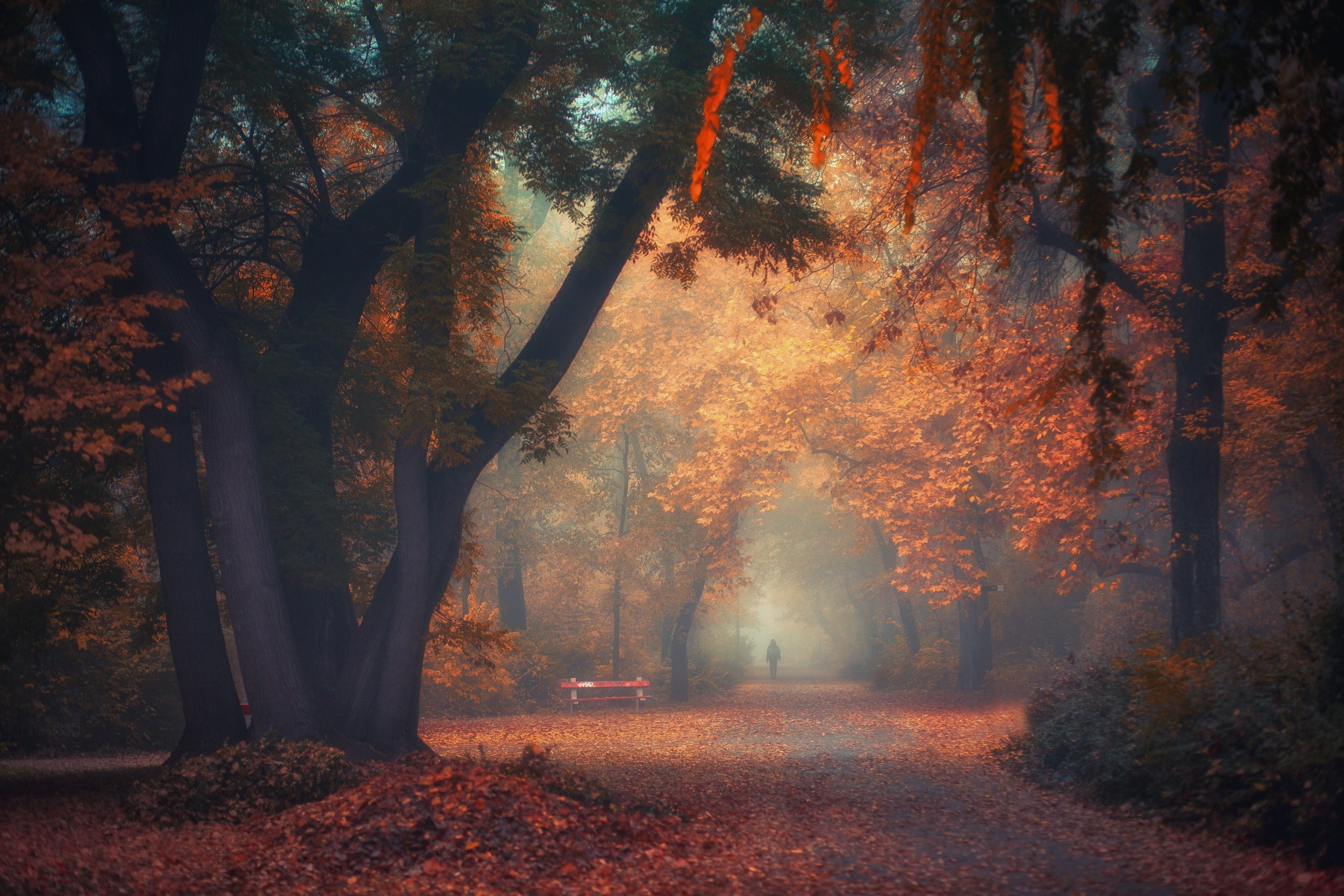 Wallpaper Backgrounds Fall Walking Nature Photography Landscape Park Morning