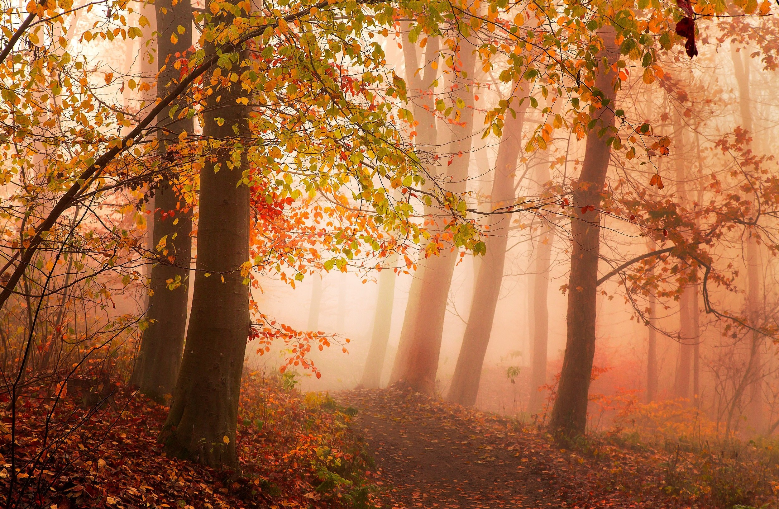 Rustic Fall Wallpaper Photography Nature Landscape Morning Mist Sunlight